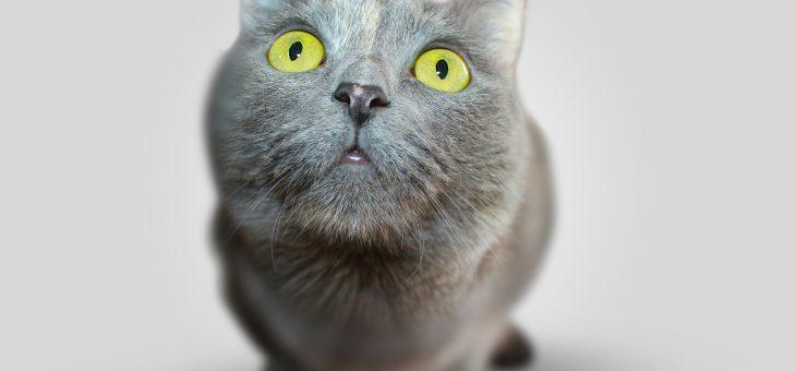 Trabalho escravo: a comida do seu gato é da Nestlé?