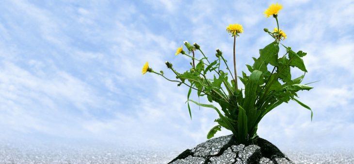 Cuidado com a crença popular: O que significa resiliência?